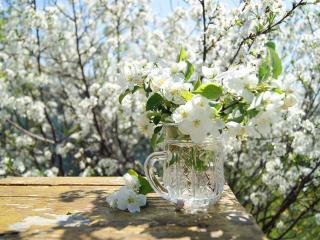 обои Натюрморт - Весна долгожданная фото