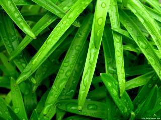 обои Зеленые влажные листья фото