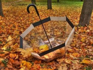 обои Шуршит осенняя листва фото