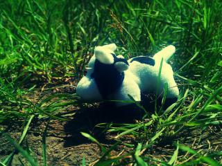 обои Мягкая игрушка в траве фото