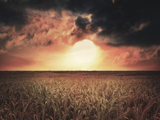 обои Пылающий закат у поля ржи фото