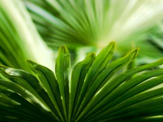 обои Длинные листья зеленого растения фото