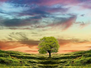 обои Тень дерева на траве фото