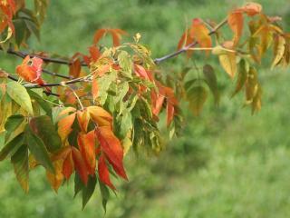 обои Осенние штрихи фото