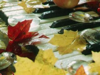 обои Осень на клавишах фото