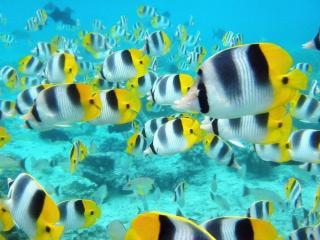 обои Рыбки - мотросы фото