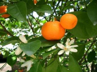 обои Цветы и плоды фото