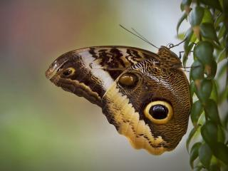 обои Бабочка на зелёной веточке фото