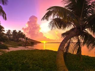 обои Густая трава и пальма у воды фото