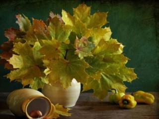 обои Натюрморт - Букет кленовых листьев фото
