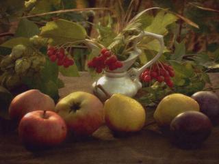 обои Натюрморт - Груши,   яблоки и калина фото