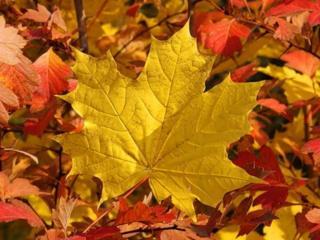 обои Жёлтые и красные осенние листья фото