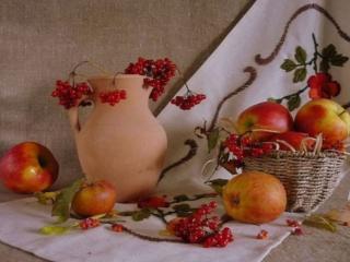 обои Натюрморт - Калина с яблоками фото