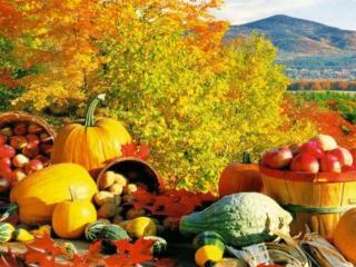 обои Осенние щедроты фото