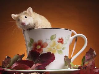 обои Мышка из чашки фото