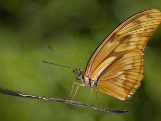 обои Бабочка на палочке фото