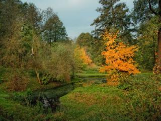 обои Дыхание осени у ручья фото