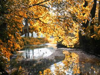 обои Осенние грезы фото