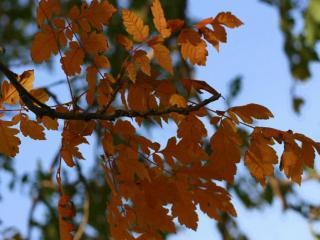 обои Крымская осень фото