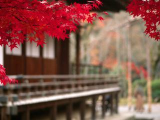 обои Красная осень у дома фото