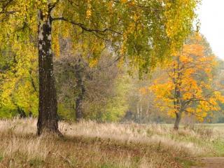 обои Осенние мотивы фото