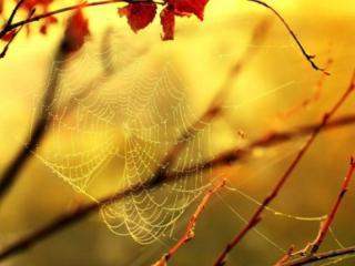 обои Осенняя паутинка фото