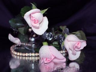 обои Розовый жемчуг фото