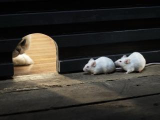 обои Спрятались мышки от кота фото