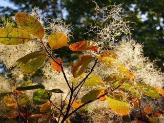 обои Осенний пух фото