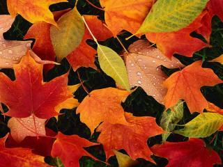 обои Листья разных цветов фото