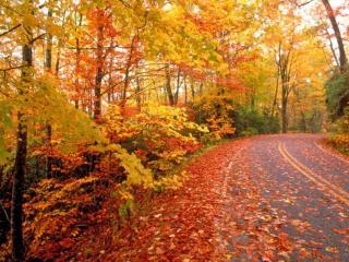 обои для рабочего стола: Осенняя дорога