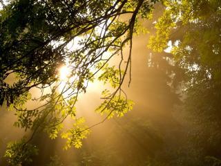 обои Виднеет туман с лучах солнца в лесу фото
