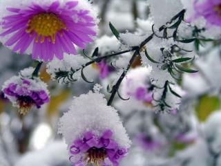 обои Застывший поцелуй Зимы фото