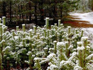 обои Выпал первый снег фото