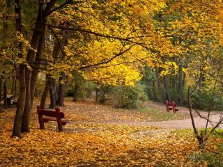 обои Осенняя сказка фото
