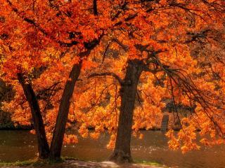 обои Осенние деревья у пруда фото