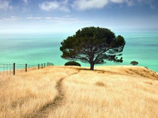 обои Пейзаж одинокого летнего дерева, на склоне фото