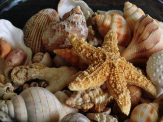 обои Морская звезда и ракушки фото