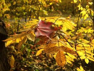обои Осенние веточки и листья фото