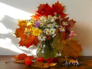 обои Осенние листья,   цветы и ягоды фото