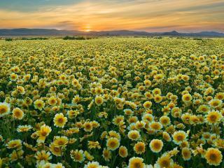 поле желтое закат  № 680926  скачать