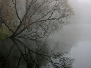обои Осенний,   туманный рассвет фото