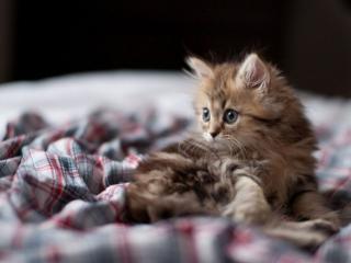обои Котёнок проснулся фото
