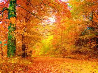 обои Лесная дорога в осенних листьях фото