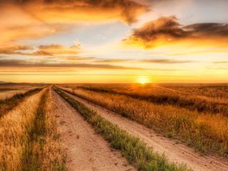 обои для рабочего стола: Пламинеет закат над дорогой полевой