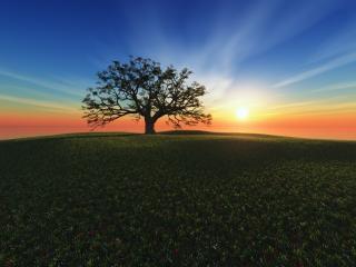 обои Цветет поле у дерева фото
