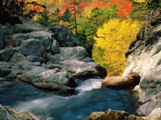 обои Карельская осень на ручье фото