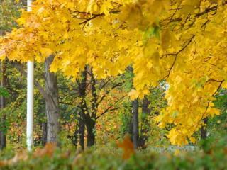 обои Осень,   рыжая подружка фото