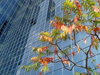 обои Городская осень фото