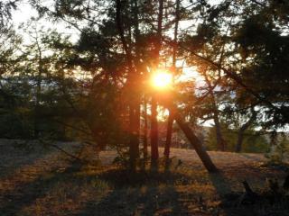 обои Лесной закат фото